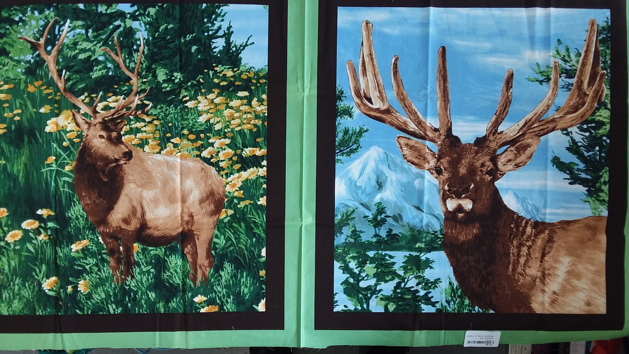 American Elk--clearance