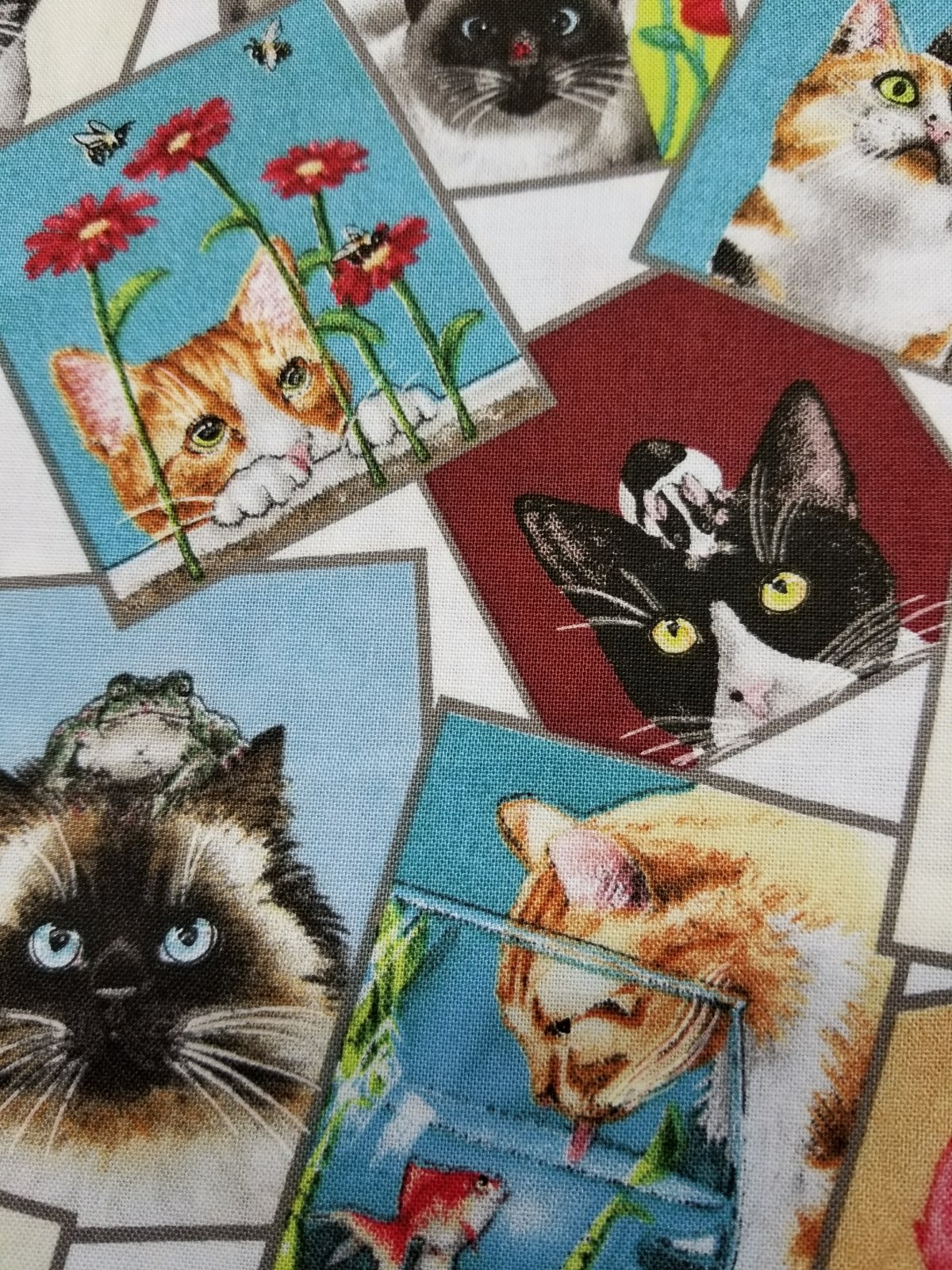 Curious Cats - *Clearance*