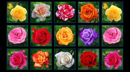 Digital Garden Rose --panel clearance