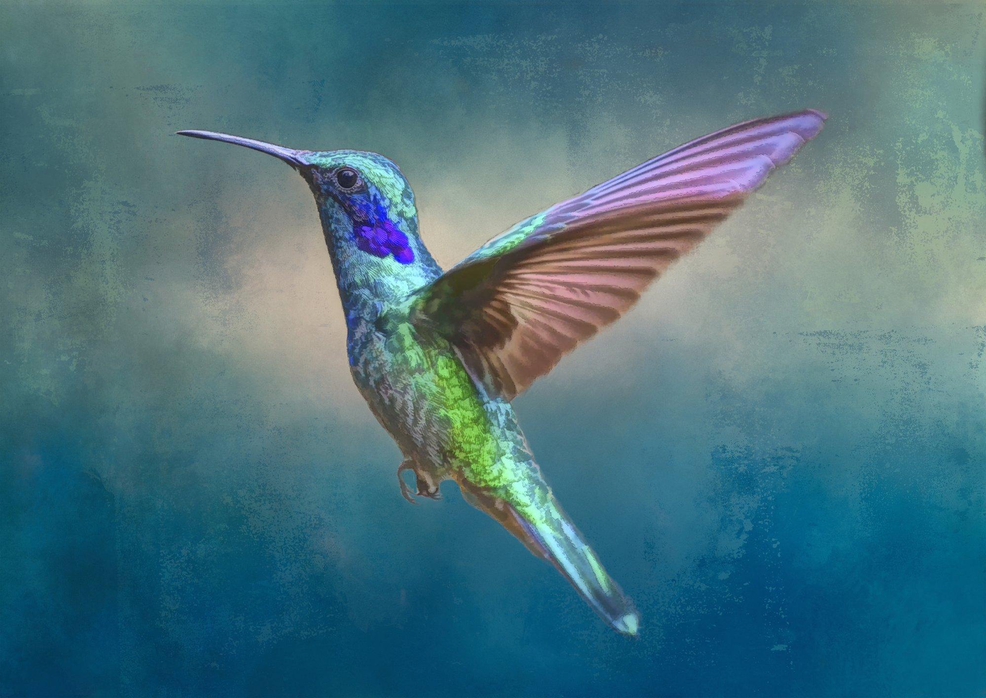 Bejeweled Beauty Hummingbird in Flight Digital Panel