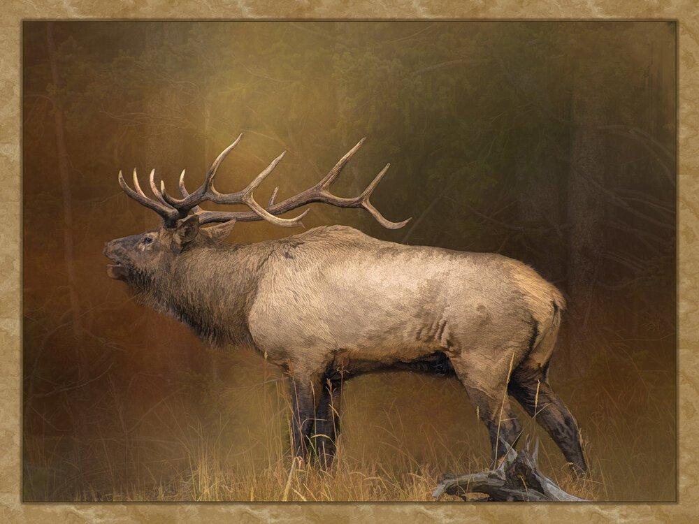 Bugling Bull Elk Digital Panel