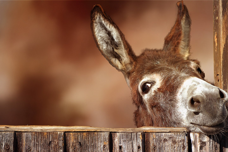 Donkey at the Gate Digital Panel