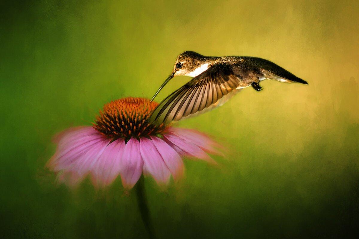 Hummingbird on Cornflower Digital Panel
