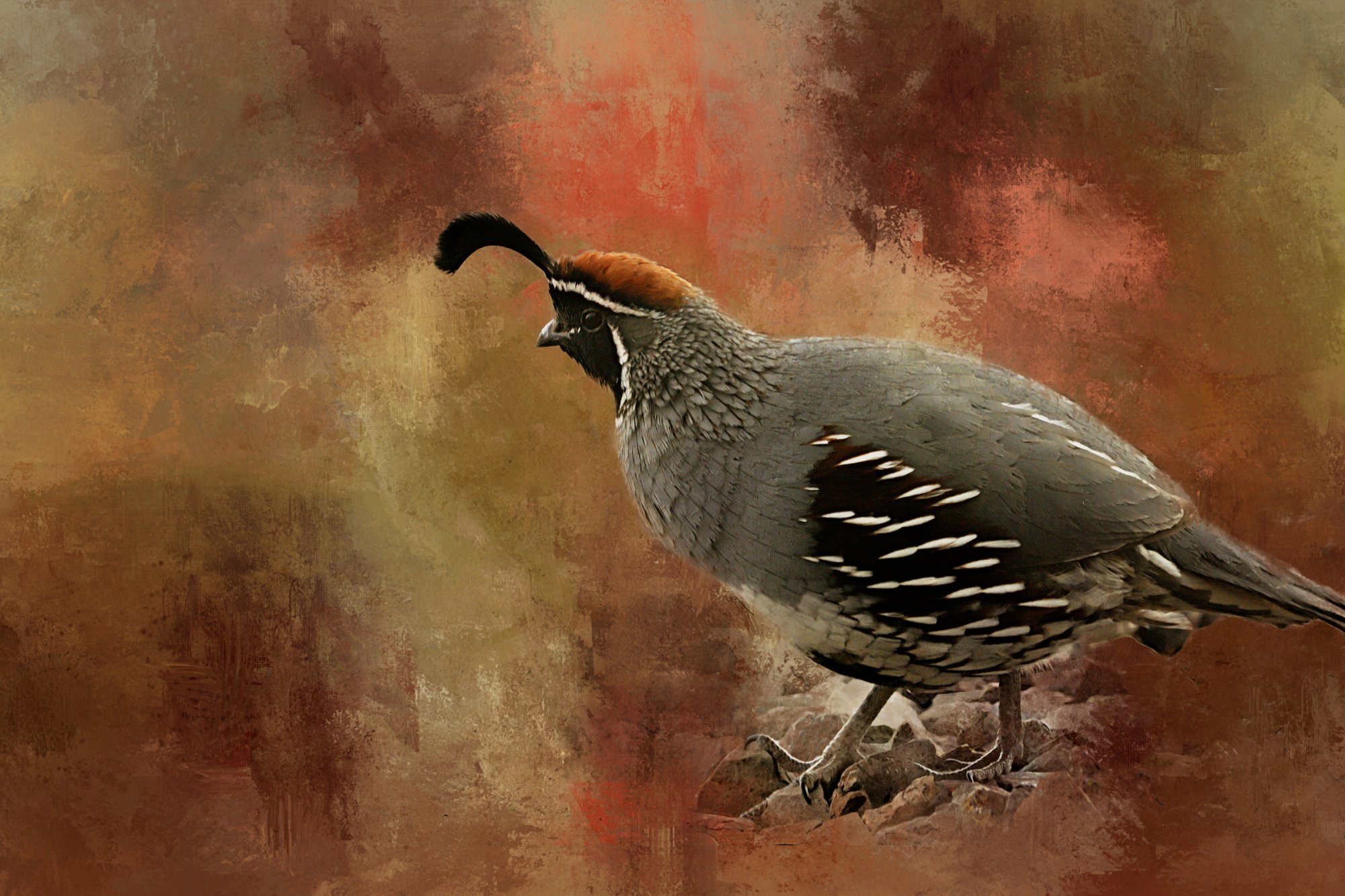 Gambel Quail on the Lookout Digital Panel