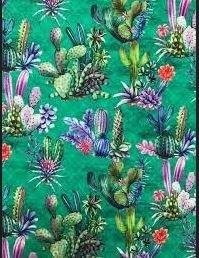 Lanzarote Succulents