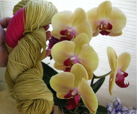 Golden Orchid - Galaxy