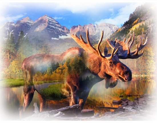 Call of the Wild 34 x 43 Moose  Panel