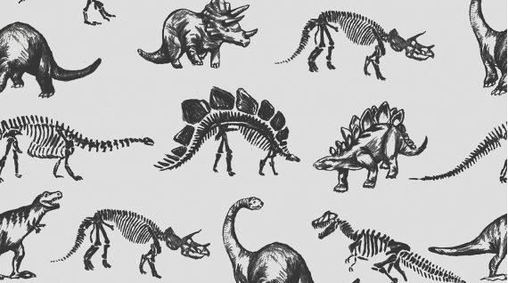 Stellasaurus 753-GREY