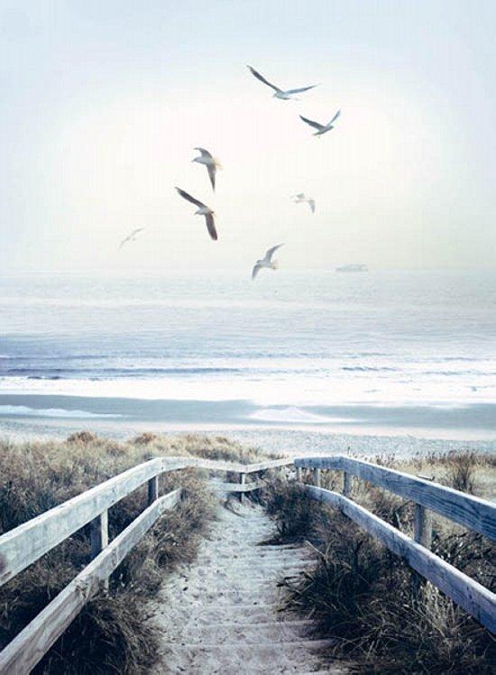 PANEL #907 HOF CALL OF THE WILD BEACH STEPS
