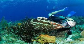 Diver with grouper