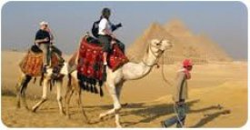 Camel with Pyramid