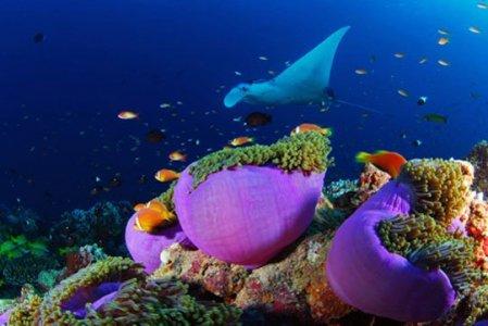 Colorful coral in Maldives