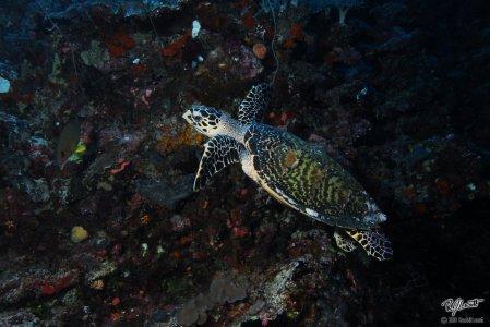 Turtle in Playa Del Carmen