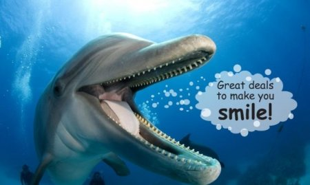 Dolphin Deals to make you smile