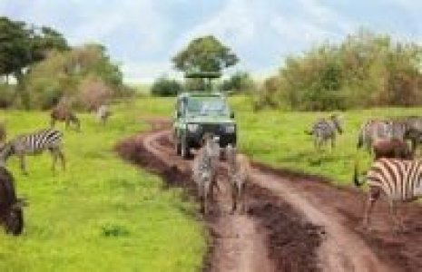 Safari trips to Botswana and Tanzania