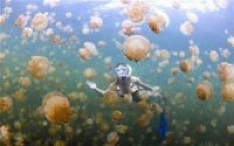 Jellyfish lake in Palau