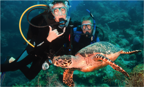 Individual dive travel bookings