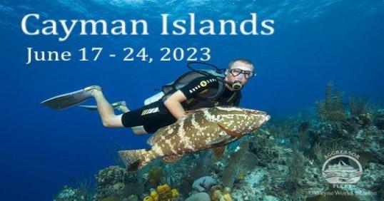 Cayman Grouper