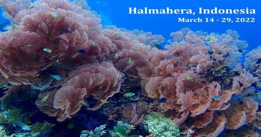 Halmahera Sea, Indonesia