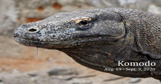 Komodo, Indonesia 2020
