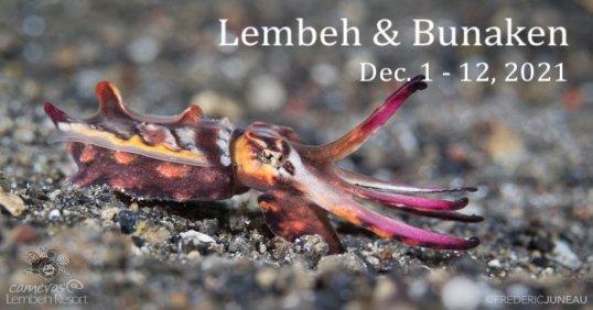 Lembeh Cuttlefish