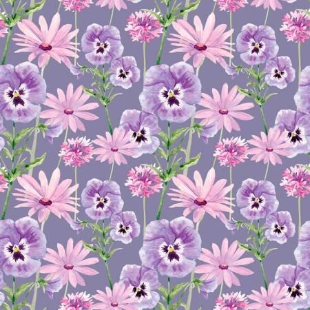 Midnight Hydrangea Purple daisy