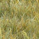 Landscape Medley - grass