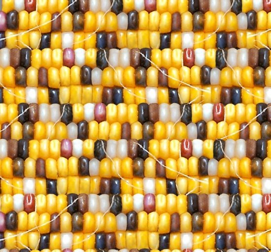 Tucson - multi-color corn kernals