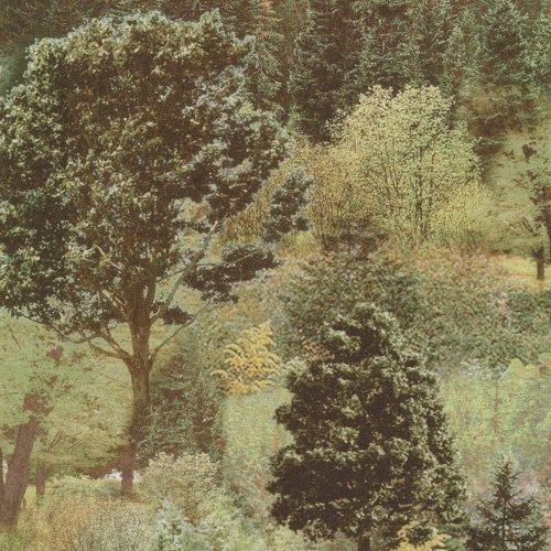 FQ-Smoky Forest 148-14182 Digitally Printed