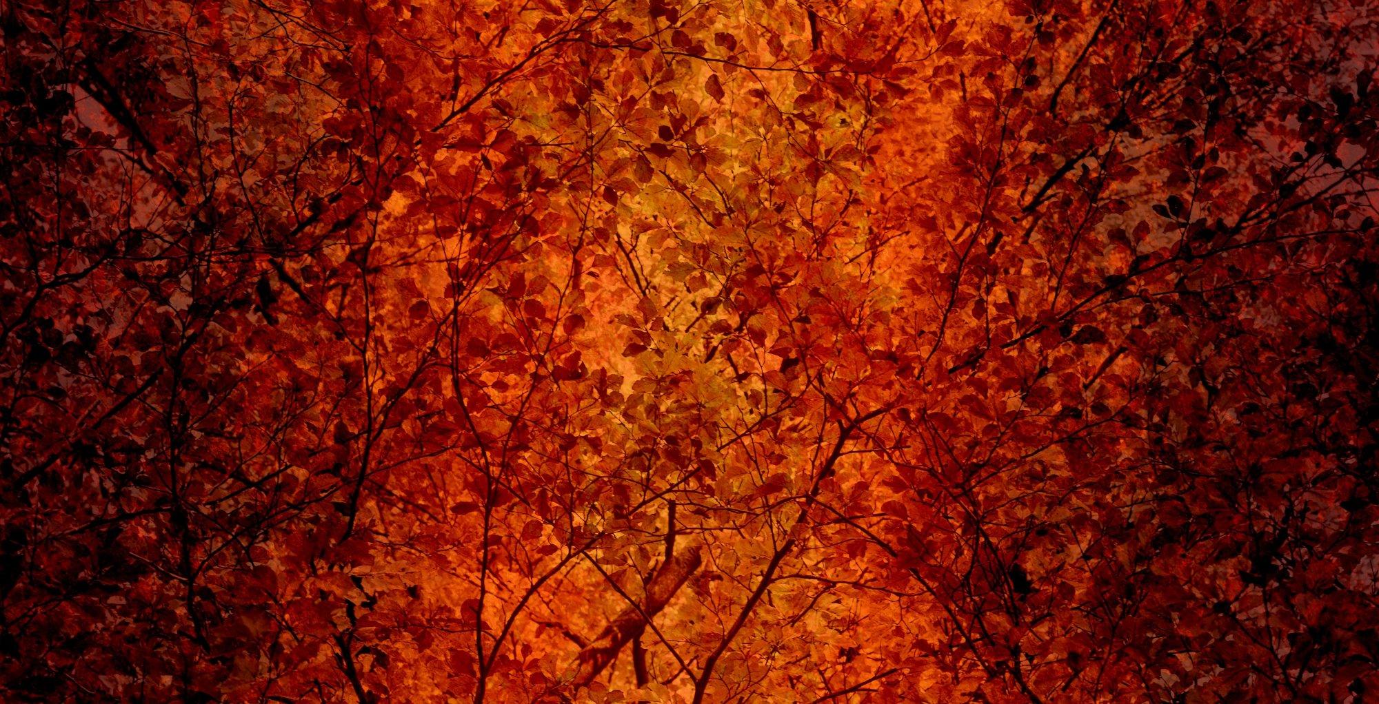 FT-Fall Holidays 17788-O Beautiful Leaves