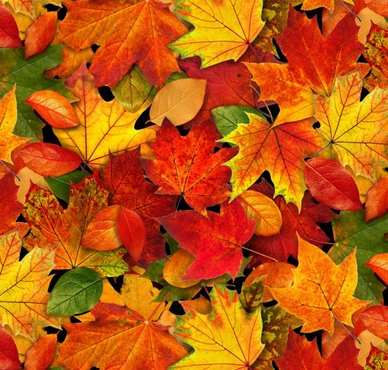 ES-Landscape Medley  478 Multi Autumn Leaves