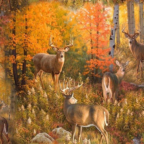 Autumn Fabrics!