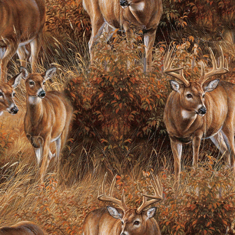 SC-Wild Wings Field Day 68411 Deer Scenic