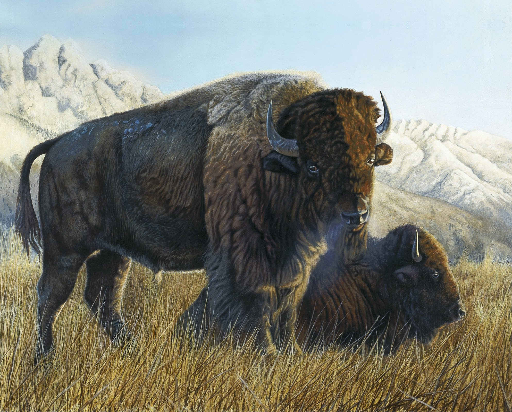 DT-Exclusive Digital Prints AL-3858-1 Resting Buffalo Panel