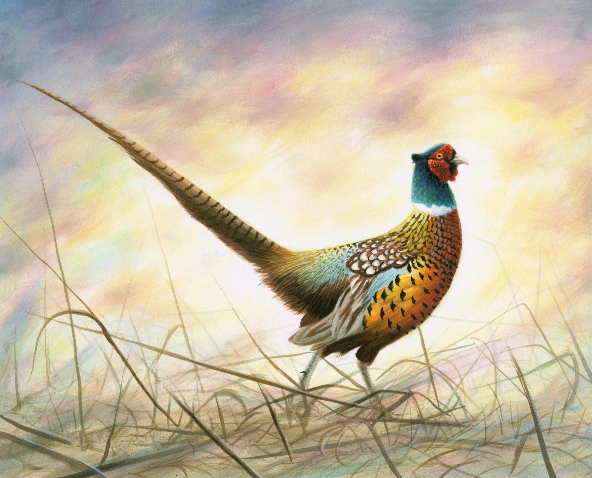 DT-Exclusive Digital Prints AL-3861-1 Spring Rooster Pheasant Panel