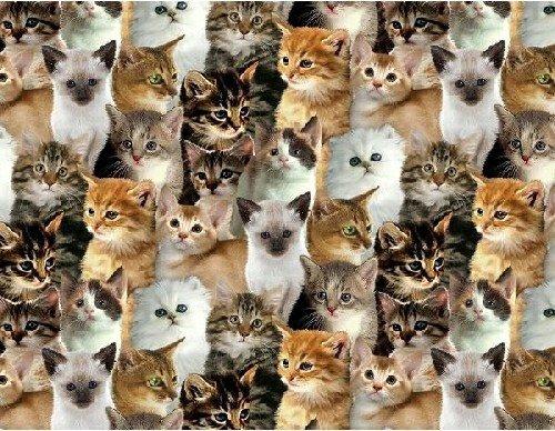BT-Winterfleece 31772-X Kittens