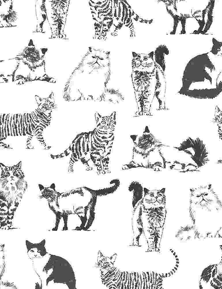 TT-Cat C8241 White - Sketched Realistic Cats