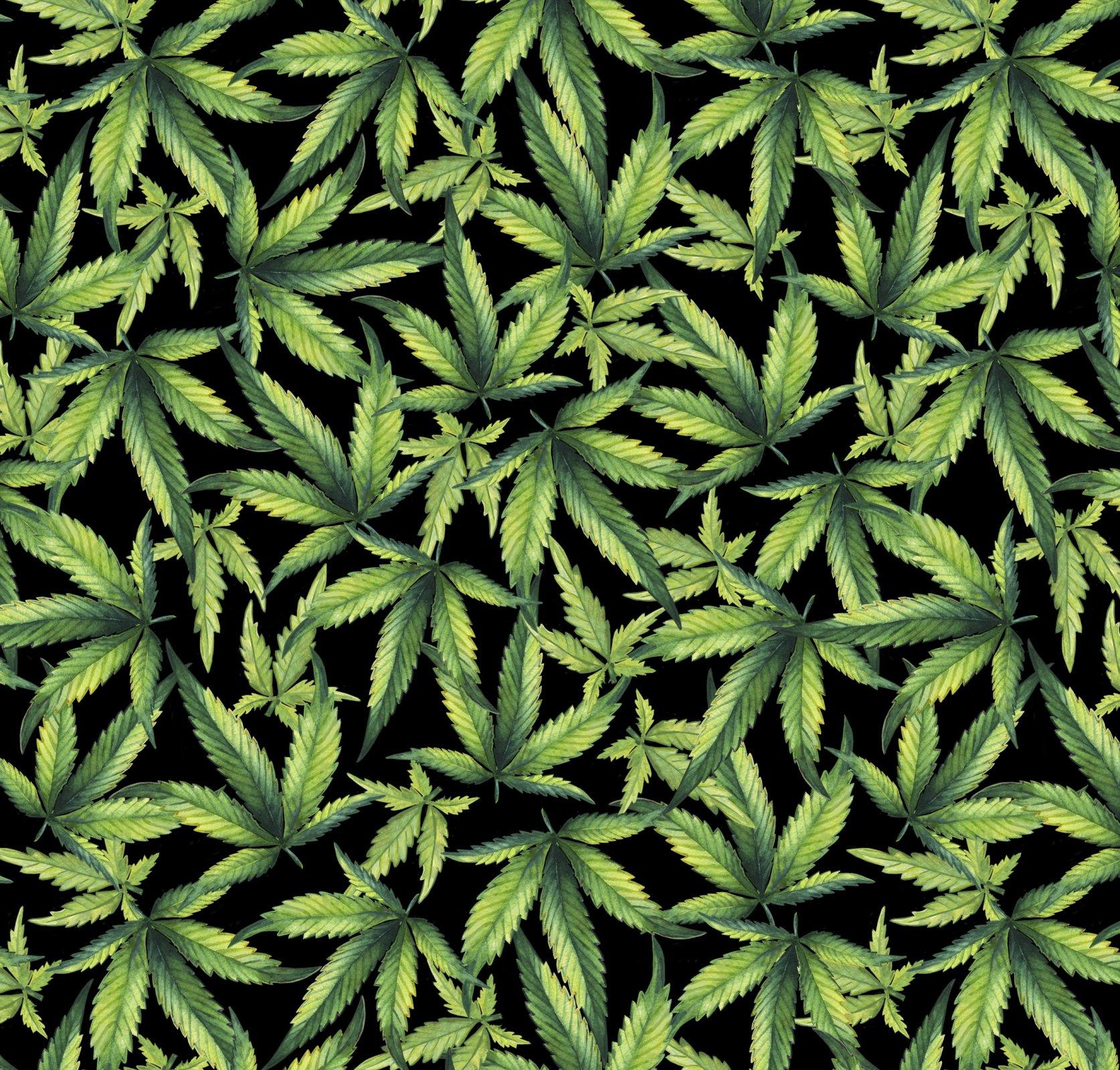 DT-Exclusive Digital Prints DX-1323-0C-1 Black/Multi - Marijuana Plant