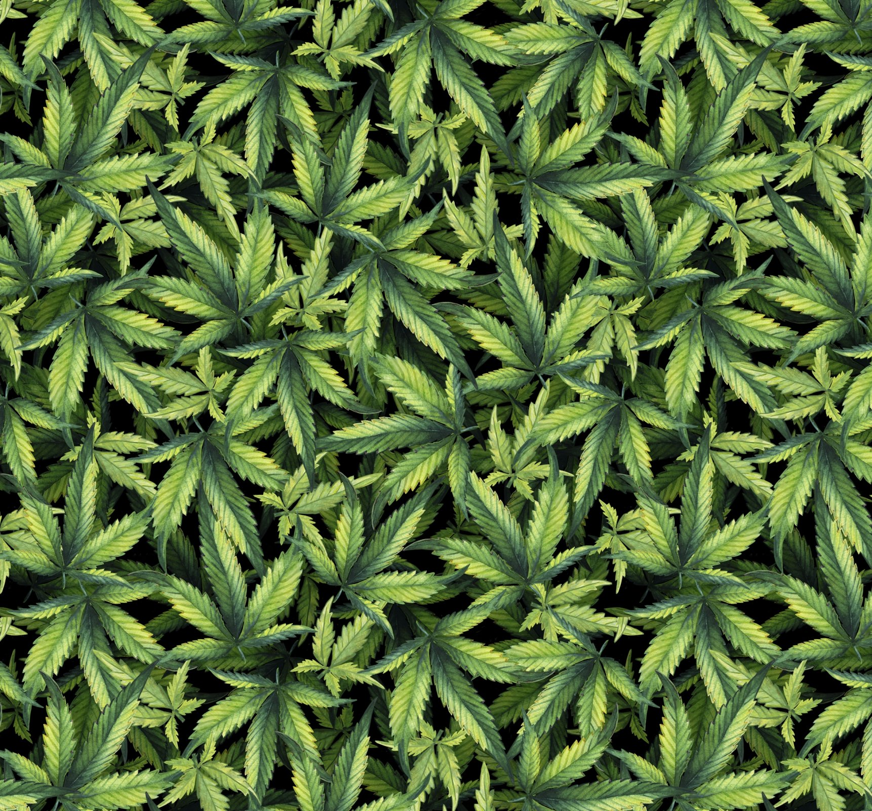 DT-Exclusive Digital Prints DX-1324-0C-1 Black/Multi - Marijuana Plant Packed