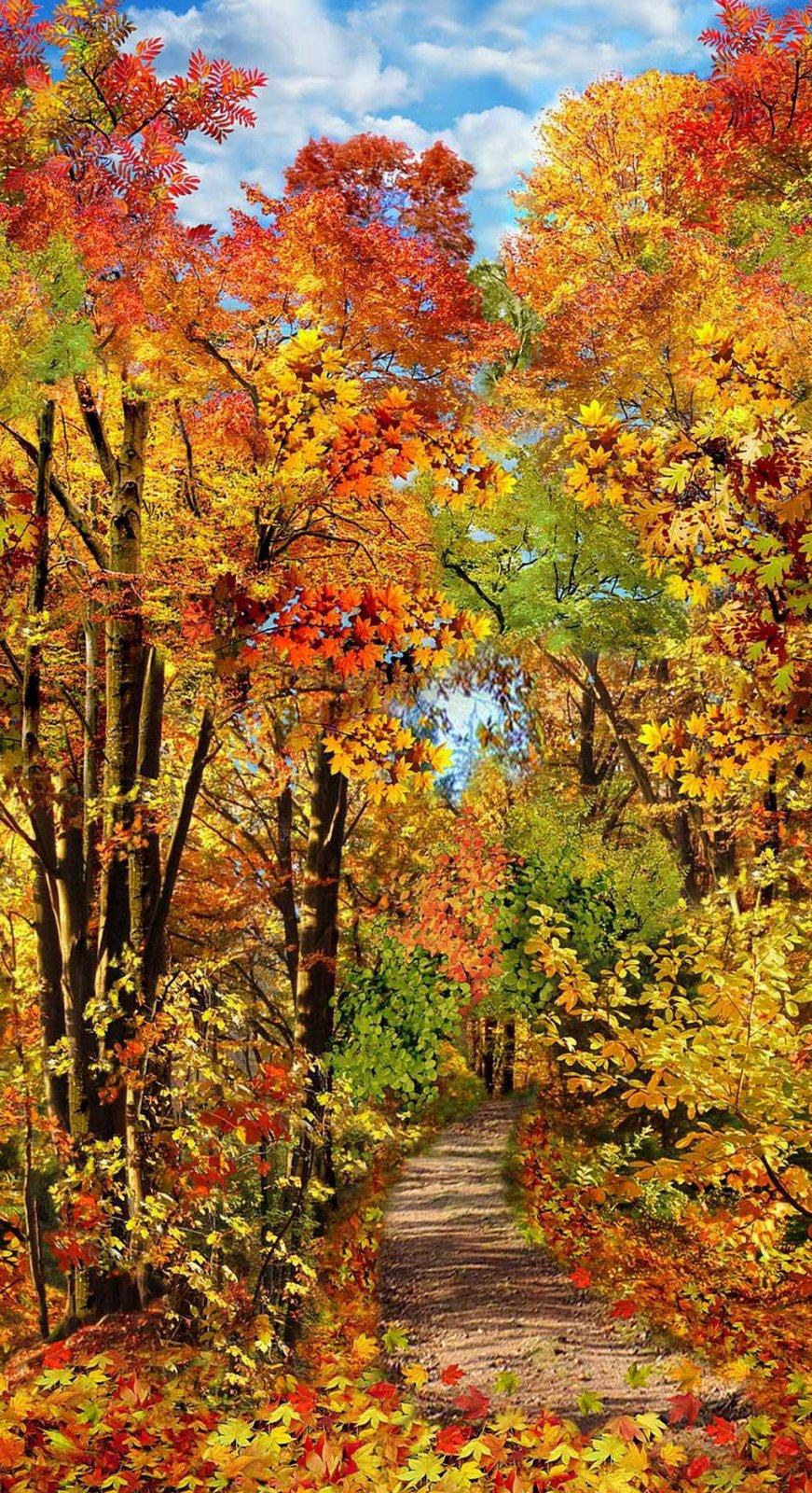 TT-Panel C8647 Multi - Fall Foliage Panel