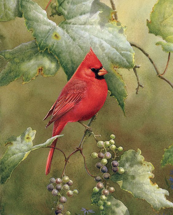 DT-Exclusive Digital Prints WW-3110-9C-1 Multi - Red Cardinal in the Orchard 36 x 44 Panel