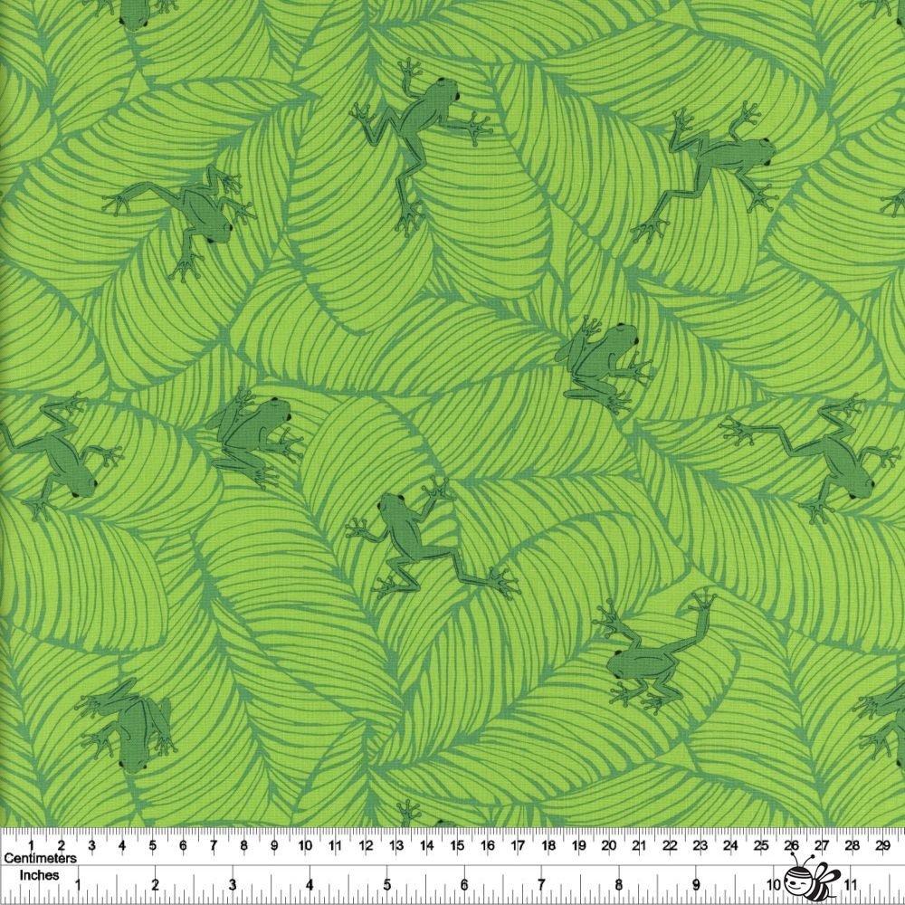 Jungle Paradise - Oh Froggy - Seedling