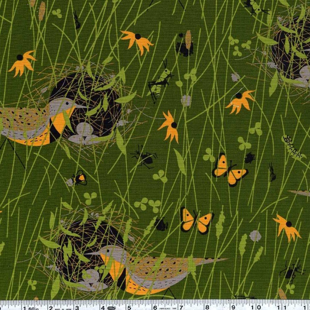 Bird Architects - Eastern Meadowlark