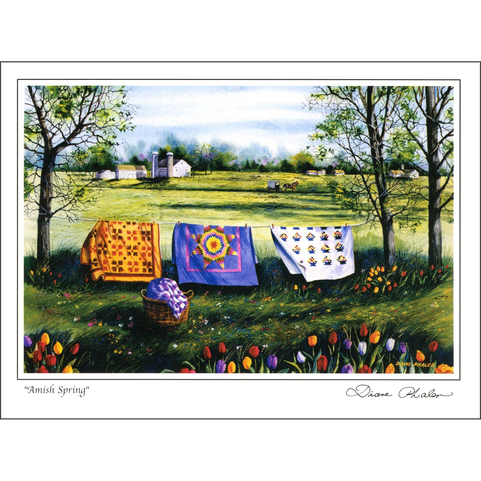 Greeting Note Card -  Amish Roadside Spring