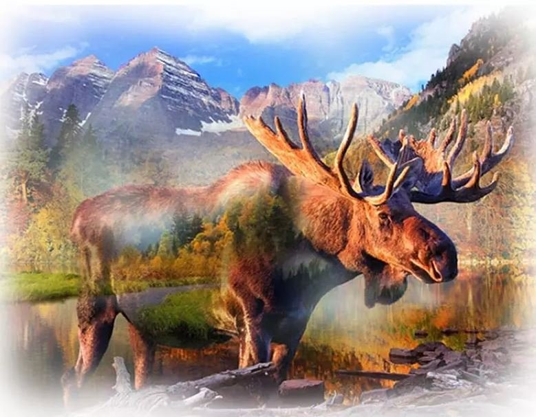 Hoffman S4797 623 UMBER MOOSE  PANEL 33x44 CALL OF THE WILD Digital Panel