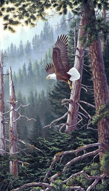 Northcott Naturescapes Beyond the Forest - Eagle Digital Panel - DP 21936 91
