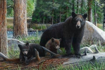 Northcott Naturescapes Black Bear Adventure- Digital Panel - DP21937-36