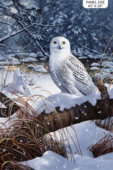 Northcott Snowy Owl Panel 23518 49 Digitally Printed