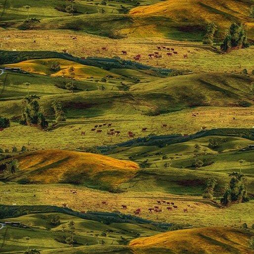 Merino Muster Australian farmland paddocks