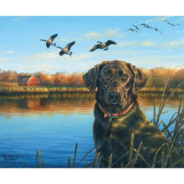 Labrador faithful friend